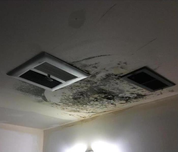 Mold Remediation Does Your Home or Commercial Building Have A Mold Problem?