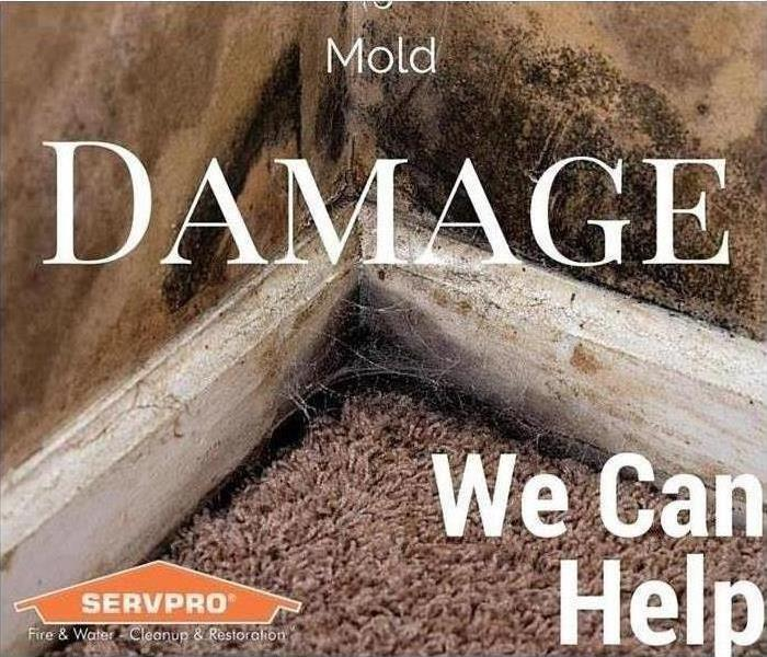 Mold Remediation East Clackamas, Hood River and Wasco County Residents:  Follow These Mold Safety Tips If You Suspect Mold